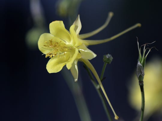 There are many varieties of native plants available