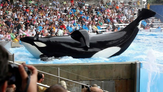 """Tilikum in a scene from the motion picture """"Blackfish."""""""