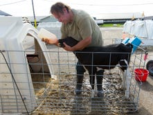 Wisconsin prison dairy farms turn out 1st class of inmate graduates