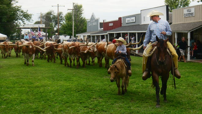 Longhorn cattle walk through the grounds in the Historic Old Abilene Town during Chisholm Trail Days in Abilene in 2019.