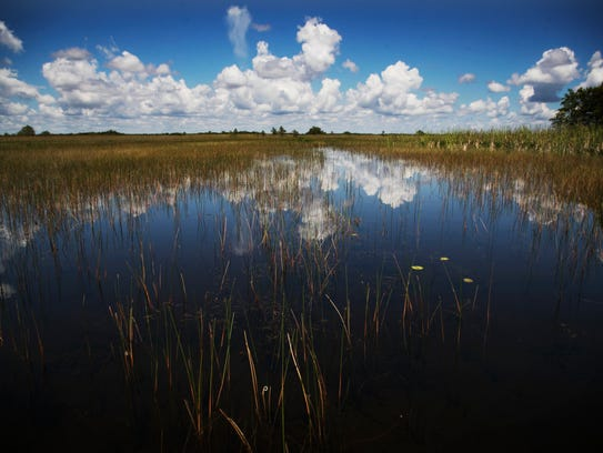 Francis S. Taylor Wildlife Management Area in the Everglades