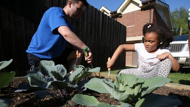 Clayton Amshoff, left, and Monica Gordon, 8, weed around cabbage plants in the food garden at the Cabbage Patch Settlement House.  The children plant food as part of the Seed to Table program.  Amshoff is the gym monitor.May 15, 2017