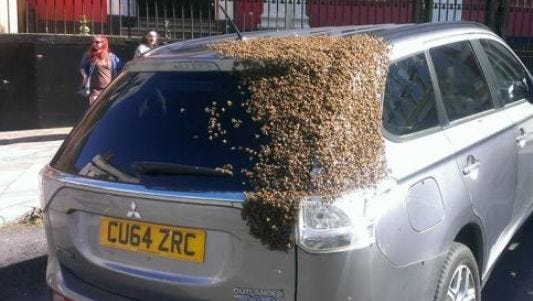 Also in England, the Florida of Europe, a hive of angry bees attacked a Mistsubishi Outlander, probably because a Cadillac Escalade wasn't available.