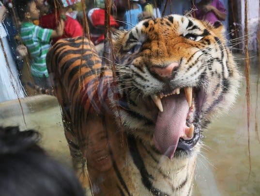 EPA EPASELECT PHILIPPINES ANIMALS HUM ANIMALS PHL MA