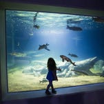 OdySea Aquarium in Scottsdale: 8 tips, things to know before you take kids