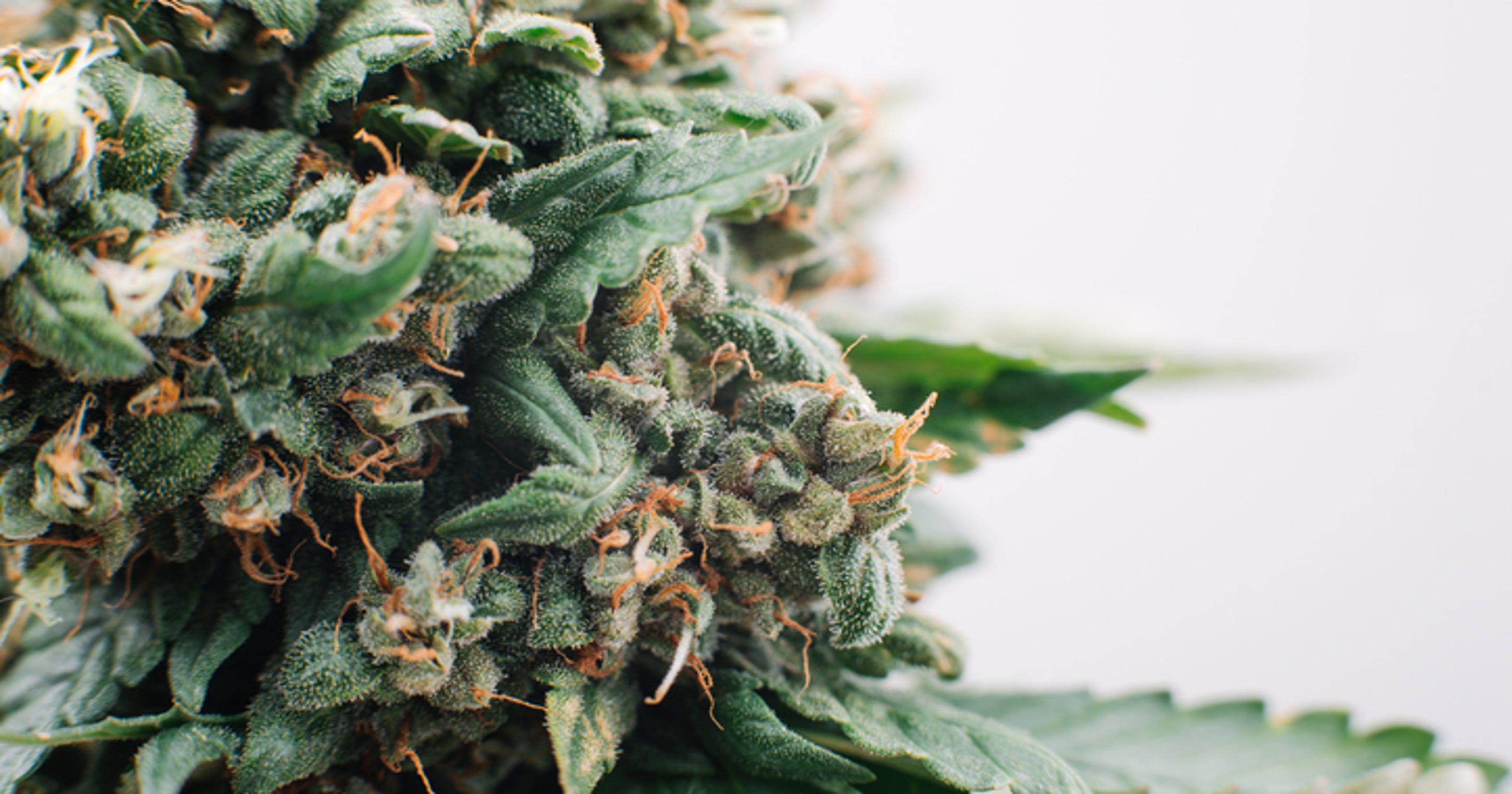 Medical marijuana card cost in Arizona could be cut by half
