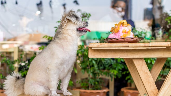 Dogs would be allowed on restaurant patios under a bill advancing in the Michigan legislature.