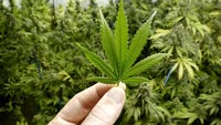 Cincinnati City Council voted 5-3 to decriminalize possession of up to 100 grams of marijuana,