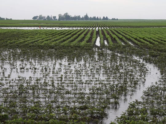 Several inches of water stand in Dallas Center farmer Jon McClure's soybean field on Friday. McClure and other central Iowa farmers expect to lose crops due to recent severe weather that dumped several inches of rain over parts of the region. McClure estimates 10 to 15 percent of some of his fields will die.