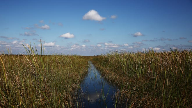 The view from an airboat in the Everglades National Park on Sunday, Nov. 1, 2015. The park is a popular destination for Collier County airboaters to fish, swim, and race airboats.