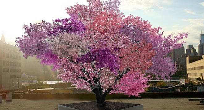 Artist rendering of the Tree of 40 Fruit