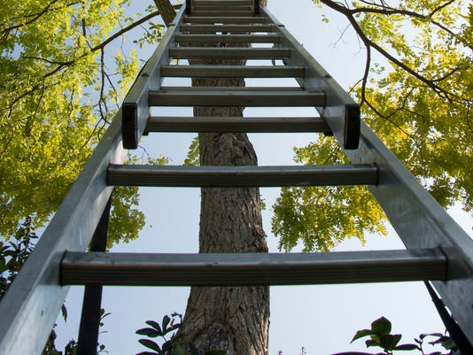Ladder leading to the top of the tree