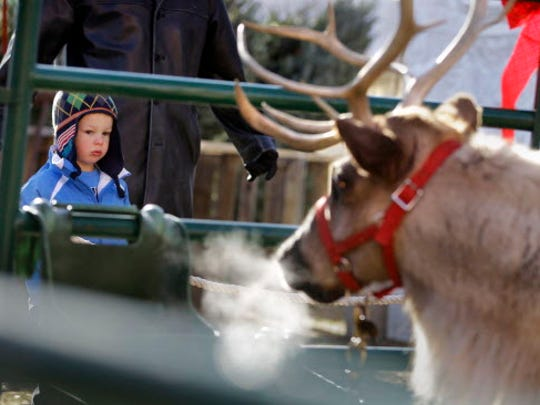 Zachary Paulsen, 3, from Franklin, Wi,  stays close to his father Ted Paulsen and keeps a curious yet wary eye on Vixen, a live reindeer on display during Christmas in the Ward.