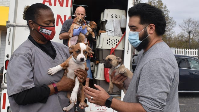 This Nov. 13, 2020, photo shows handlers with rescue dogs from Georgia in Falls Church, Va.