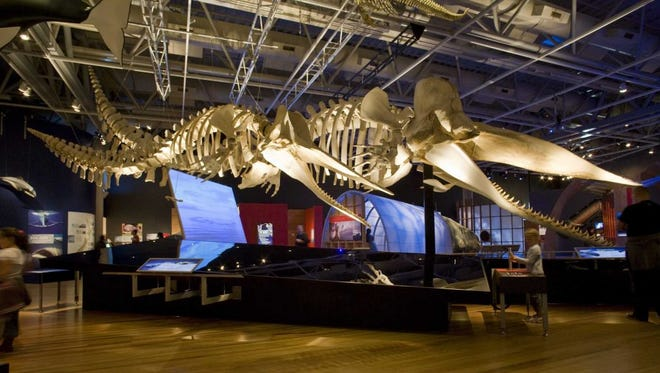 """""""Whales: Giants of the Deep debuts Saturday, May 27, 2017,  at the Witte Museum."""