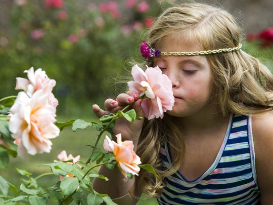 Nine year-old Kayla Kosmalski smells a rose in the gardens at Brandywine Park in Wilmington on Thursday afternoon.