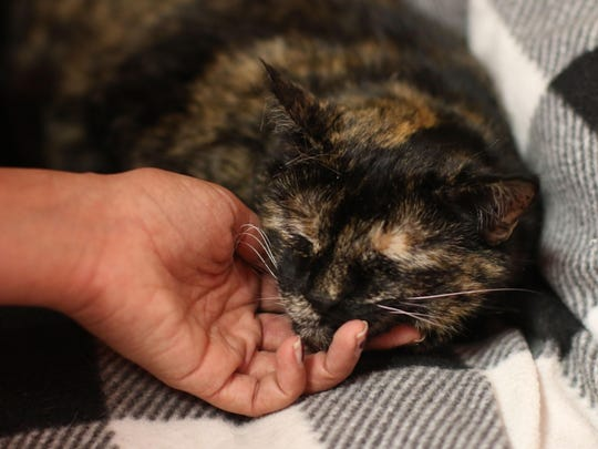 Mature woman seeks companion Name: Trixie Age: 11 years old Bio: I'm not high-maintenance. It's the little things that make life great. A little canned food, a few chin scratches, and I'm happy.