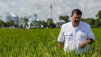 Acadiana producer Richard Fonenot farms 2,000 acres of rice and crawfish.