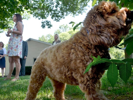 New laws to protect tethered dogs