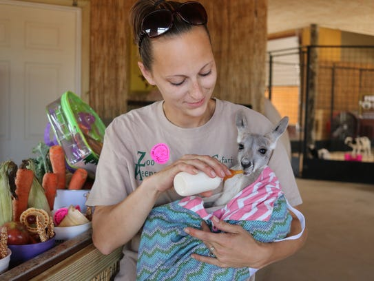 Curator Kat West feeds a kangaroo, one of the exotic