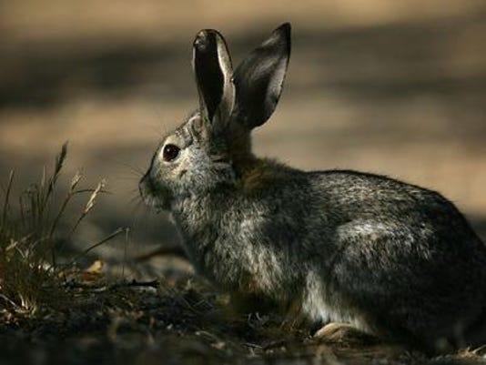 FTC_Rabbit_Fever_Death