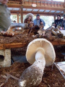 The Mt. Pisgah Mushroom Festival has something for everybody on Oct. 25 in Eugene.