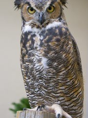 File photo of a great horned owl at the Howell Nature