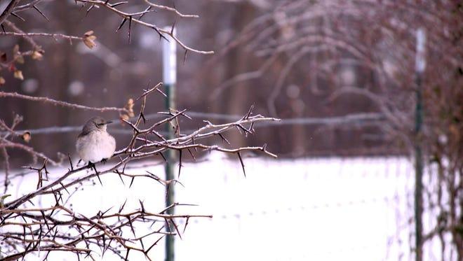 Snow in Springfield