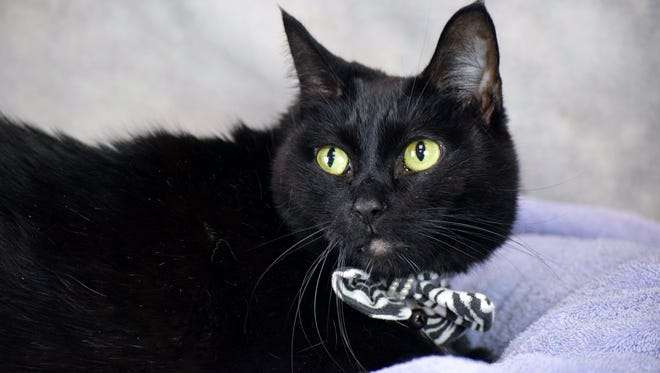 Sasha is easy-going and affectionate.