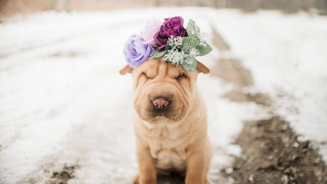 Local photographer Erin Ryall-Santo held a puppy photo shoot to raise funds for a local animal rescue.