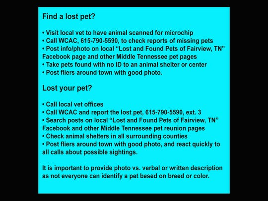 What to do if you find a lost pet or lose your pet