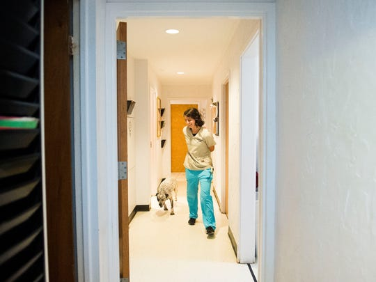 Kristina Kravchenko, 17, runs down the hallway with dog Dot at Ideal Veterinary Hospital in Oak Ridge on Tuesday, May 2, 2017. Kravchenko is a kennel technician there and is graduating from the University of Tennessee with a degree in animal science this month.