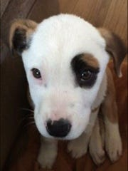 Thanks to the Walthour family's care, this puppy was recently placed in a her forever home.