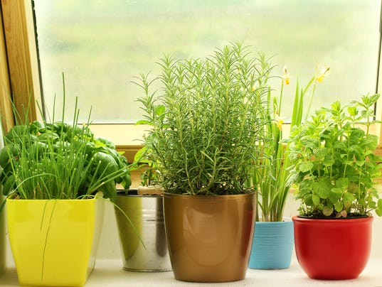 Indoor herb gardening made easy for Indoor gardening made easy
