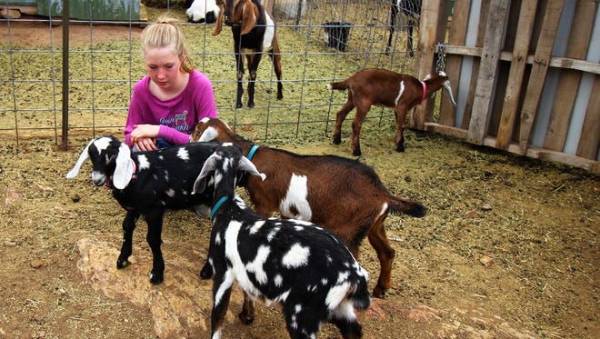 Ryleigh Lamb looks after the goats on the family's Rock Creek Ranch in Capitan.
