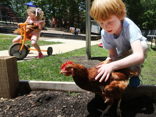 Kindergartner Anderson LaRoche picks up a chicken after it has had a dirt bath as Kidergartner Blair Harrison takes one of the school's pet chickens for a ride on a tricycle in the background, on Wednesday, April 26, 2017.