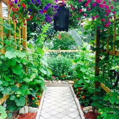 Photo of organic garden in Romeo is this week's winner