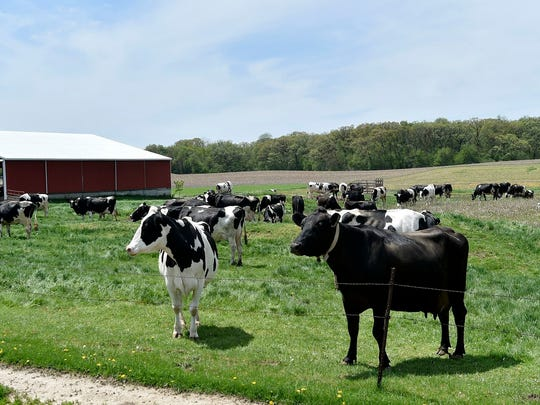 Cows pasture at Romari Farm in rural East Troy, west