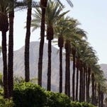Camino Dorado in Indian Wells is lined with palm trees, as seen on Tuesday, March 20, 2012. Some have already begun being taken down. Crystal Chatham, The Desert Sun