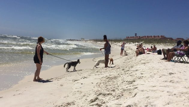 Dogs and their owners spend an afternoon at the Pensacola Beach dog park.