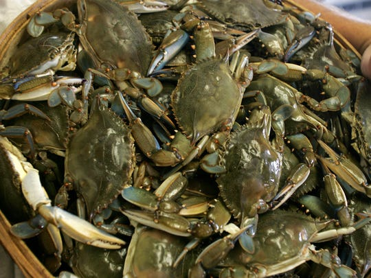 The Sedge Island Marine Conservation Zone may provide refuge from fishing for male blue crabs and may be an important area for spawning females.
