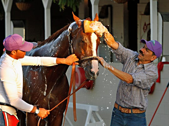 Kentucky Derby winner California Chrome reacts as groomer Raul Rodriguez, right, gives him a bath after a jog on the track at Churchill Downs in Louisville, Ky., Wednesday, May 7, 2014. Holding the colt is exercise rider Willy Delgado, left. (AP Photo/Garry Jones)