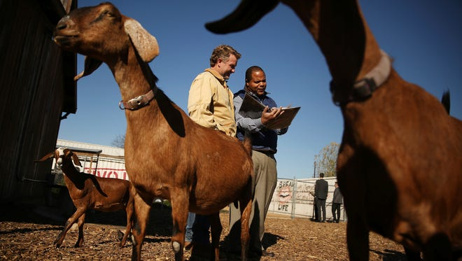 Daron Babcock, left, founder of Bonton Farms, and State Rep. Eric Johnson, of District 100, talks about the farm's goats before a groundbreaking and check donation ceremony for the Market at Bonton Farms in the Bonton neighborhood in Dallas Tuesday, Dec. 12, 2017. The neighborhood of Bonton, which is within a food desert, will now have a market with a cafe and classes for residents on preparing food and nutrition. AT&T donated $100,000 to the project.