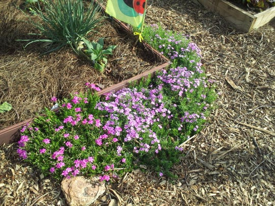 Mulch, rock, and food for pollinators.