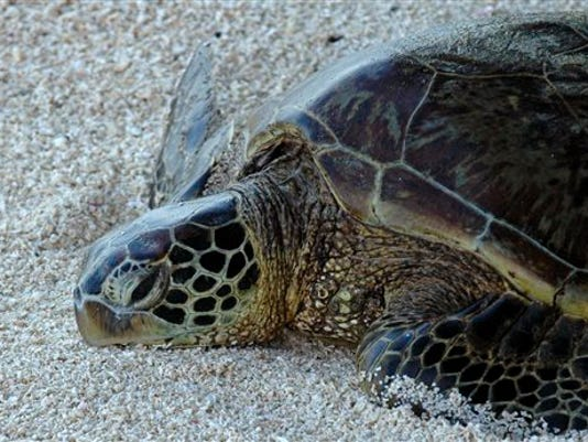Turtle Protections