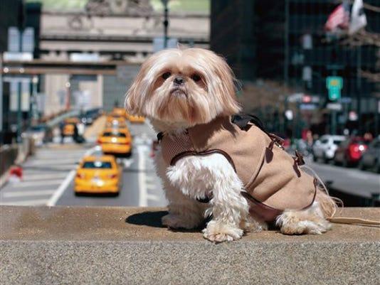 dogcoats.jpg