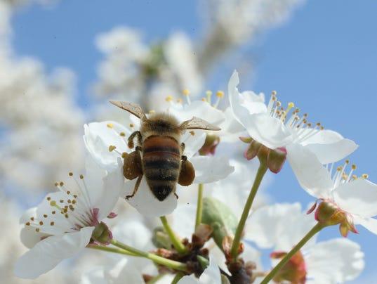 167639686SG00001_Beekeepers
