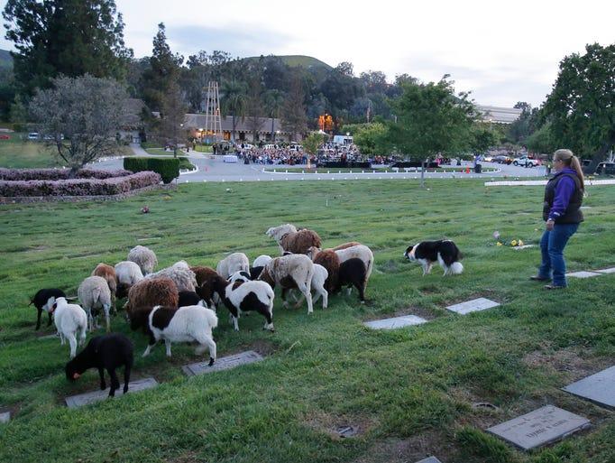 Westlake Village Dog Park
