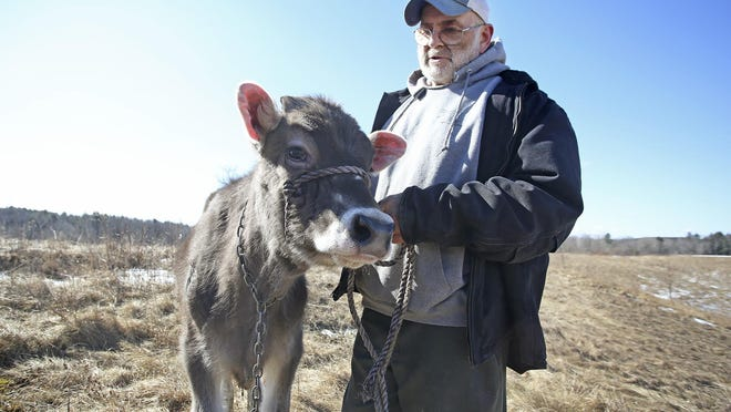 Fred Stone, owner of Stoneridge Farms, Inc., holds his 6-month-old Brown Swiss cow Lida Rose during a press conference in March 2019, addressing what Stone says was Maine's inadequate follow-up action surrounding his dairy farm that was contaminated by the toxic chemical PFAS. On July 18, Stone spoke in favor of a bill introduced by Maine Rep. Henry Ingwersen of Arundel to give those harmed by PFAS more time to sue.