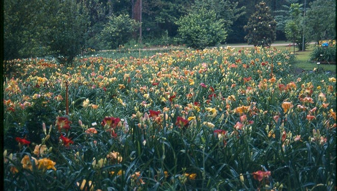 The Hattiesburg Area Daylily Society's annual Daylily Garden Tour is Monday.
